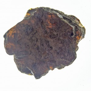 Dominican Blue Amber Half Polished