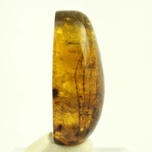 Mexican Amber Cabochon