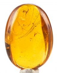Blue Green Mexican Amber with Mammalian Hair, Wasp and Fly Inclusions  5.6
