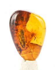 Fully Polished Blue Green Mexican Amber Piece with Cockroach Inclusion 3.7 g