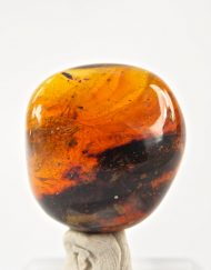Fully Polished Blue Green Mexican Amber Piece with Partial Cricket Inclusion 6.8 g