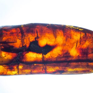 Mexican Amber Log with Beetle and Leaf Hopper Inclusions 114.1 g