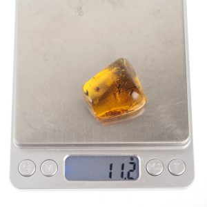 Mexican Blue Green Amber Inclusion with Tick 3.5 g