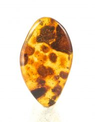 Polished Blue Green Mexican Amber Piece with Ant Inclusions 5.1g