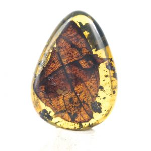 Leaf in Mexican amber