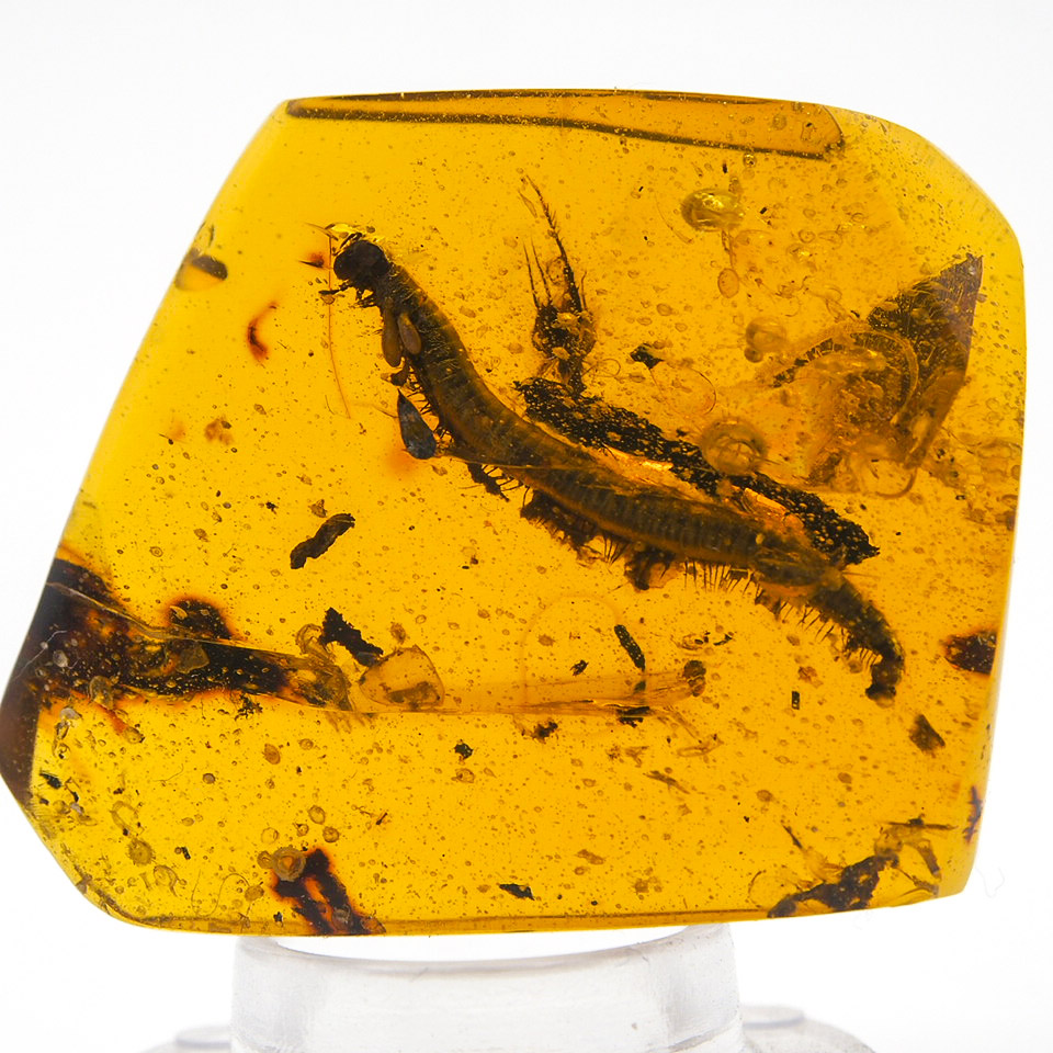 Millipede Inclusion in Chiapan Amber